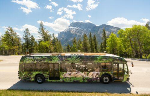 Bow Valley Roam Transit Bus June 2021 1